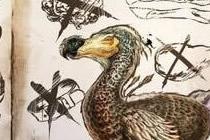 渡渡鸟怎么驯养坐骑 方舟生存进化坐骑攻略