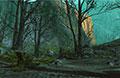 怪物猎人OL常规狩猎场黯幕之森地图资料介绍