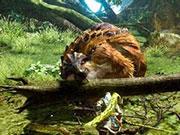 怪物猎人OL烈焰雌火龙套装属性技能一览