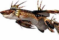 怪物生态报告 鱼龙种怪物水龙的生态介绍
