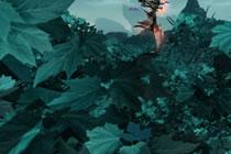 有谜底的森林 天谕游戏美景高清美图鉴赏