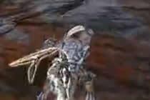 <b>怪物猎人视频 双刀锁杀极限雄火龙白金攻略</b>