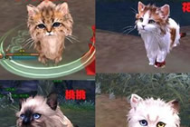 剑网3明教宠物任务攻略 波斯猫获取全流程