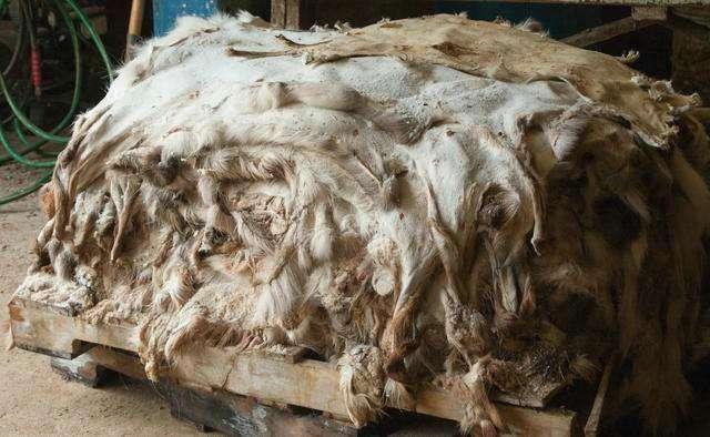 《領地人生》如何將一塊皮制作成一身甲