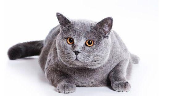为什么猫咪能像液体一样缩在小盒子里 蚂蚁庄园每日一题7月23答案