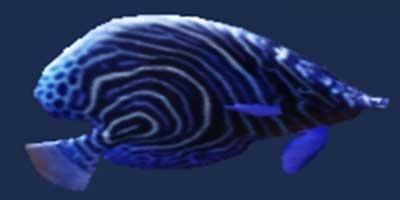 妄想山海蓝神鱼获取途径一览 蓝神鱼获得方式有哪些