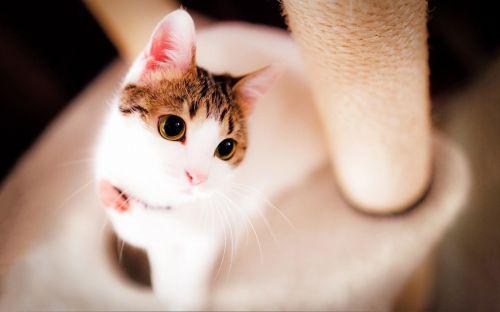 猫咪交友官网