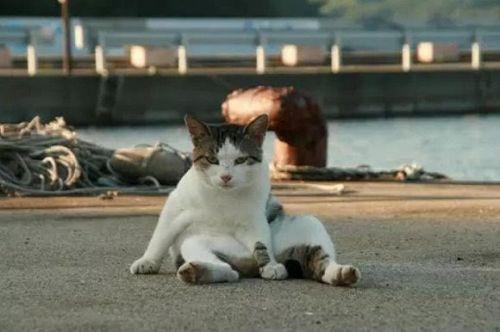 猫咪社区app手机下载安装 猫咪社区在线安装最新版