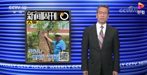 修自己的树被罚14万 当事人有话说:这么重罚,有点都想不通