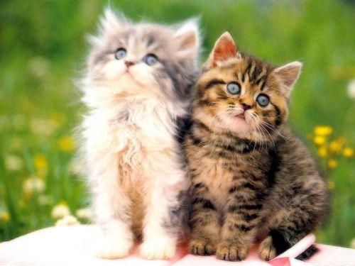 猫咪社区app官网免费下载 猫咪社区手机版最新安装
