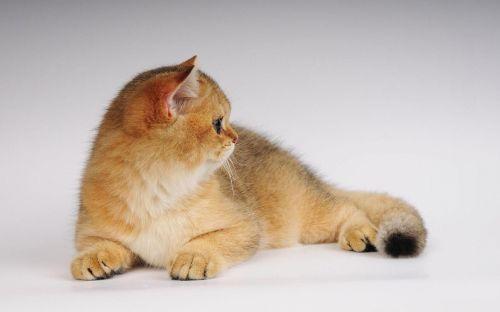 猫咪社区最新版下载 猫咪社区2021app官方正版手机下载