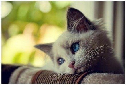 猫咪社区网页入口