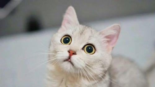 猫咪社区官方版最新免费下载 猫咪社区手机版在线下载