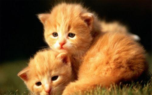 猫咪社区官方手机版免费下载 猫咪社区永久版最新下载