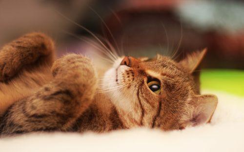 猫咪官方社区最新版免费下载 猫咪社区安卓版下载