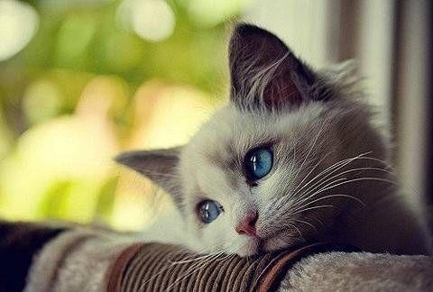 猫咪社区官方社区免费手机下载 猫咪社区新版app在线