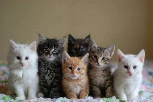 猫咪社区app在线下载