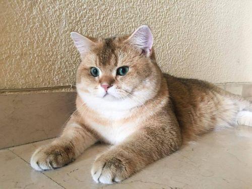 猫咪社区苹果版免费下载 猫咪社区app官网在线入口