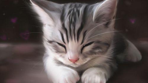 猫咪社区官方下载最新地址