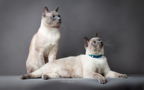 猫咪猫咪社区官网永久入口