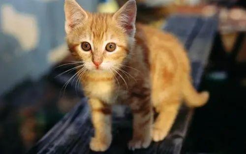 猫咪社区官方网址免费登入