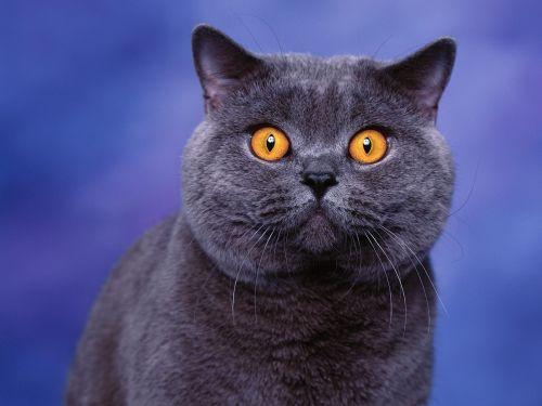 猫咪社区官网版手机免费下载 猫咪社区新版在线下载